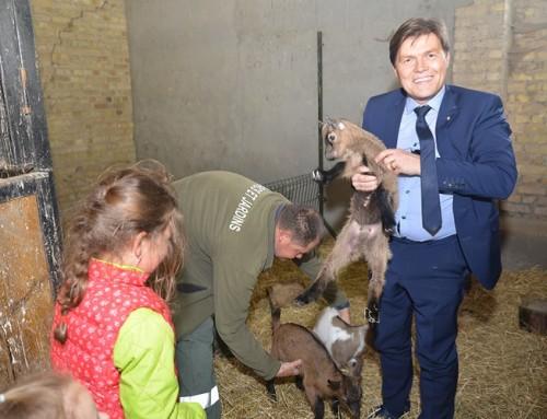 40 animaux vous attendent à la ferme Vernaelde